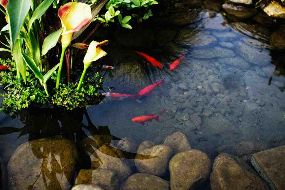 Comment faire un bassin à poissons d'extérieur