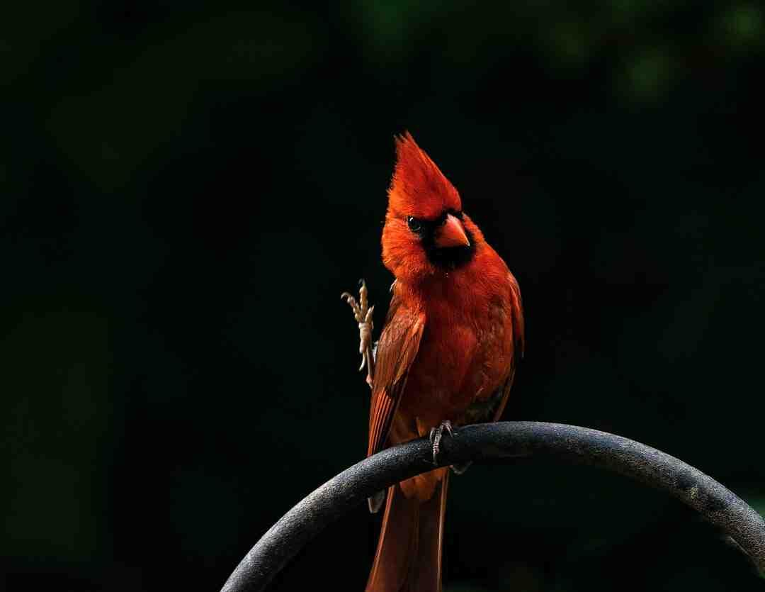 Comment se débarrasser d'oiseaux