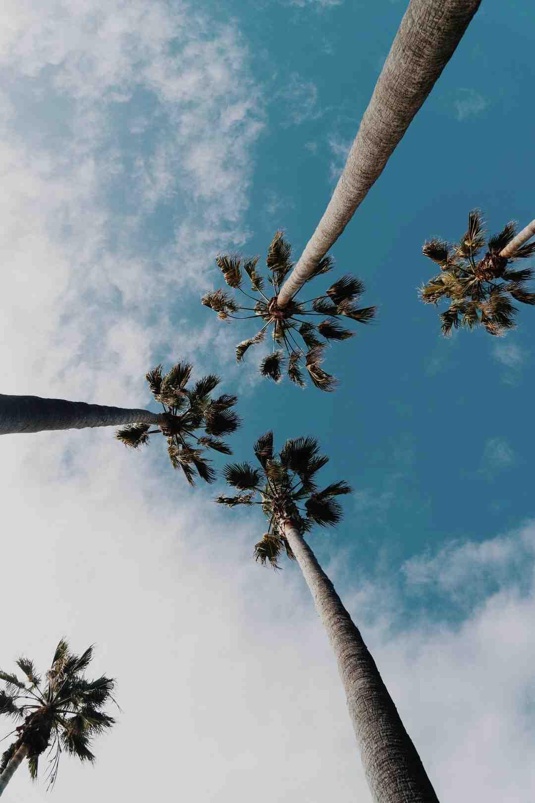 Comment tailler un palmier